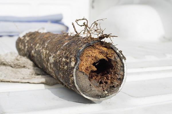 drain bouché, racines dans le tuyau